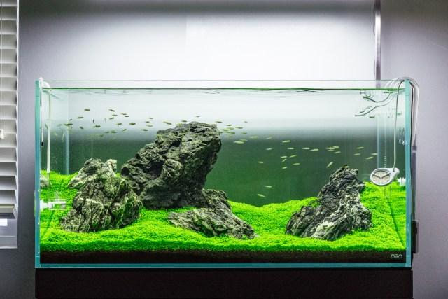 Guide To Planted Aquarium Aquascaping Iwagumi Glass Aqua