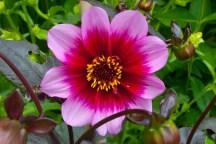 Glatton in Bloom 2012 033