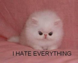 funny-cute-angry-white-cat