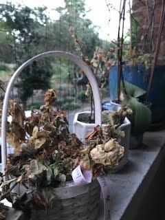 john's dead plants copy