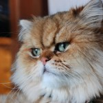 13'cat