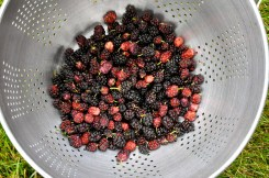 Mulberries ready to clean inside
