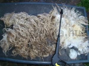 Gyapjú első mosása, a fő szennyeződések hatékony eltávolítása