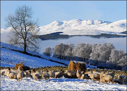 _44378993_zzz_sheep.jpg