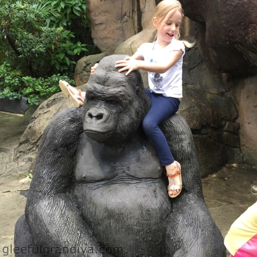 zoo picture