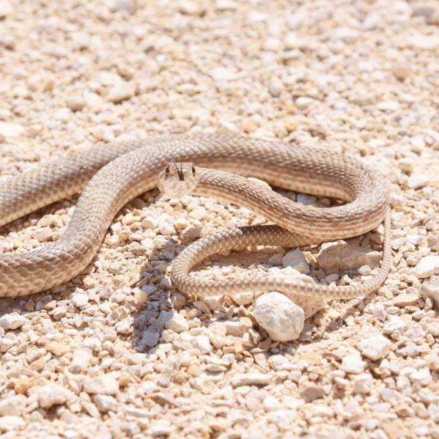 silly snake fun