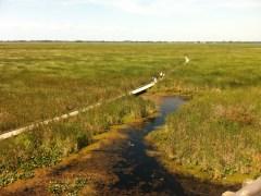 Point Pelée Marsh