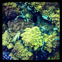 St. Lawrence Markets.