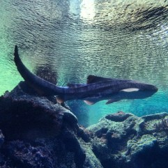 Shark Reef Aquarium at Mandalay Bay