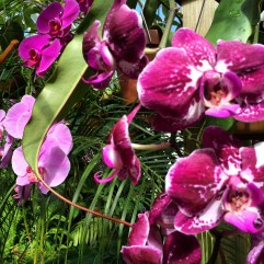 Conservatory of Flowers, San Francisco.