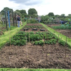 Eric & Mary's allotment.