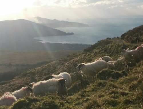 My Beara Peninsula