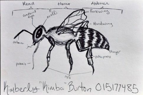Kimba Burton
