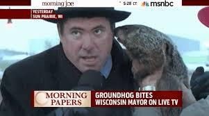 groundhog bites mayor