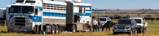 20170225_glenn-power_coorong_district_council_campdrafting_s-p-7546