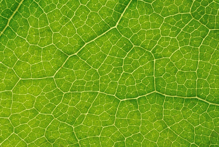 Green leaf close-up texture