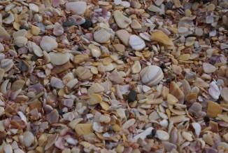 Recherche de coquillages sur une des plages de Doubtless bay