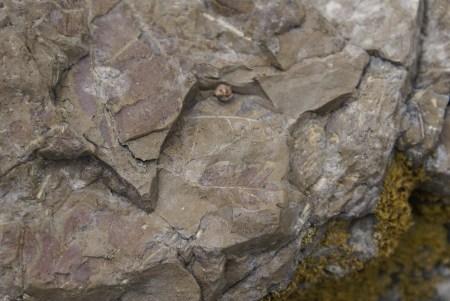 Et quelques traces de feuilles... Merci à D. et sa formation d'archéologue pour nous avoir dévoilé ce qu'on n'a su voir sous notre nez!