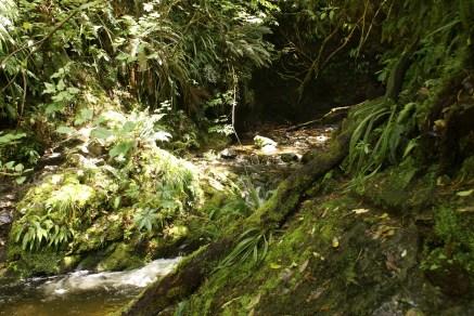 petite balade dans la Peel Forest suivant le sentier dans le lit de la rivière