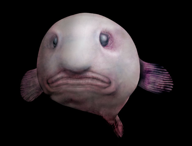 The Blobfish in Water