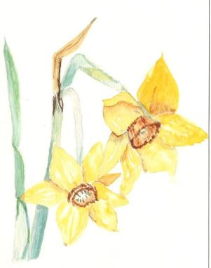 Jonquil Narcissus Flower