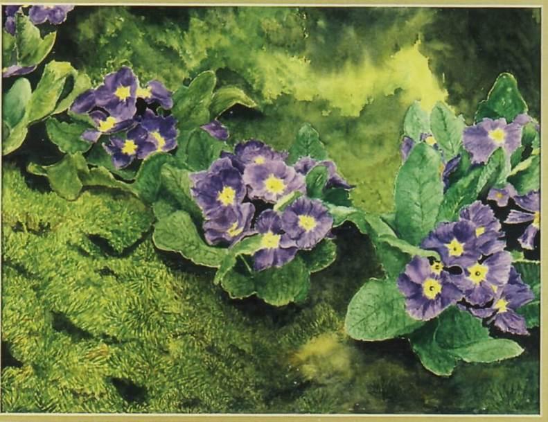 Purple on Moss