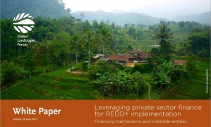 Leveraging private sector finance for REDD+ implementation: Financing mechanisms and investible entities