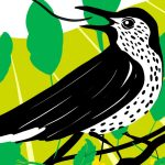 Environmental organizations issue 7 policy recommendations on biodiversity and One Health