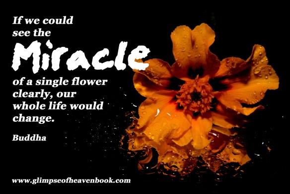 Miracle flower-144486