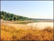 Wasit Wetlands