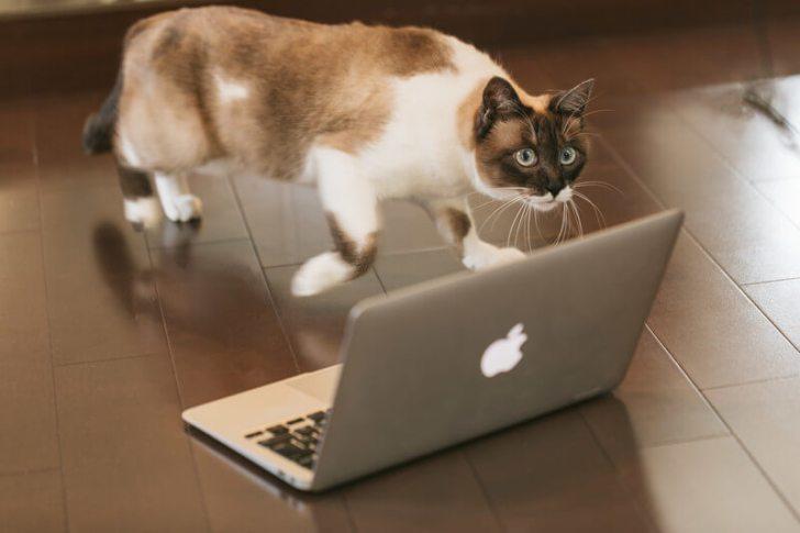 PCで選ぶ猫