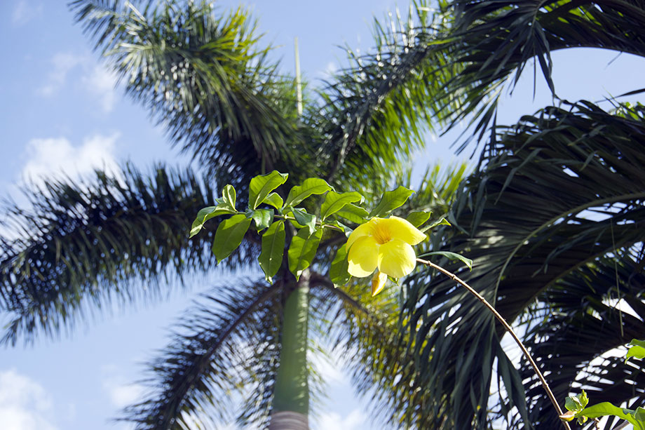 palm-and-flower