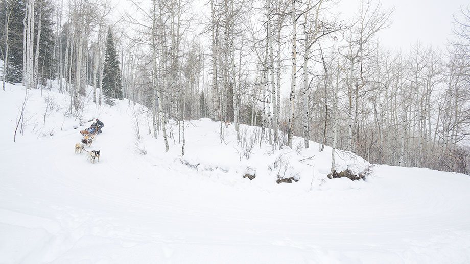 An Aspen Travel Guide by Corri McFadden of Glitter and Bubbles featuring dog sledding.