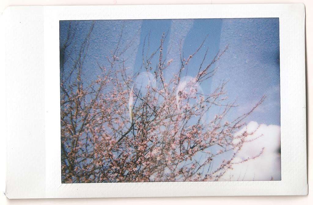 Blossom - Double Exposure