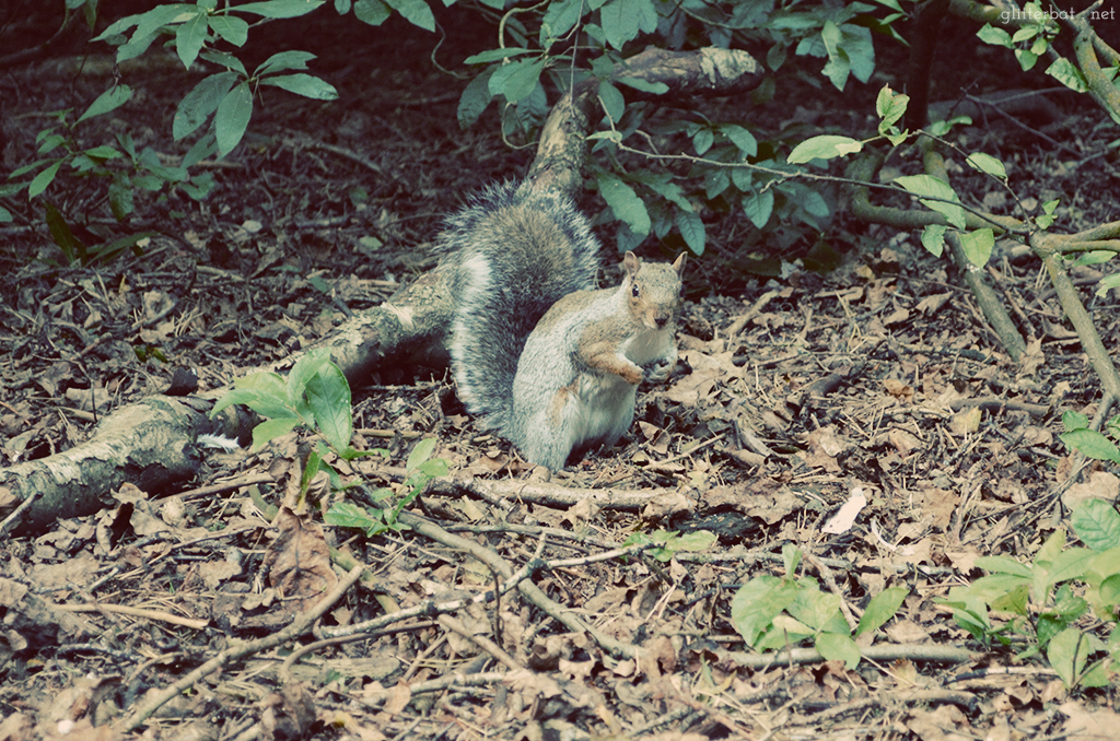 Squirrel Spotting