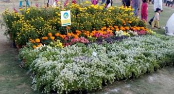glittercodes_noida-flower-show_12