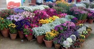 glittercodes_noida-flower-show_13