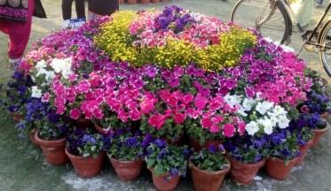 glittercodes_noida-flower-show_15