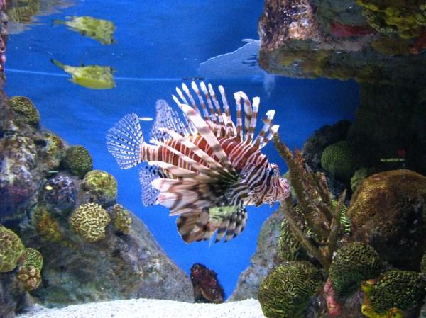 England Aquarium Glitter Glue