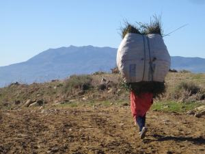 Carrying A Heavy Load - Photo by Geordon Omand