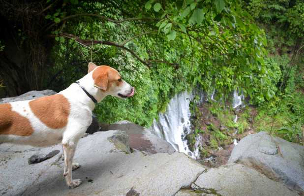 Chiquita, one of our local guides on our waterfall hike.
