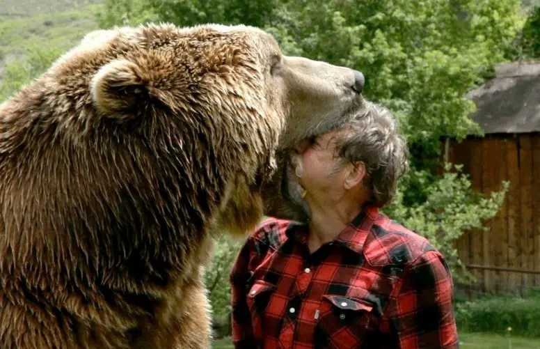 How Not To Get Eaten by a Bear (and Other Animals) in North America