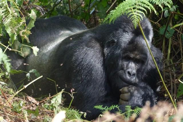 eco wildlife tour