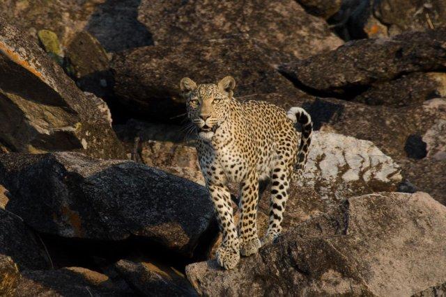 ethical wildlife tour
