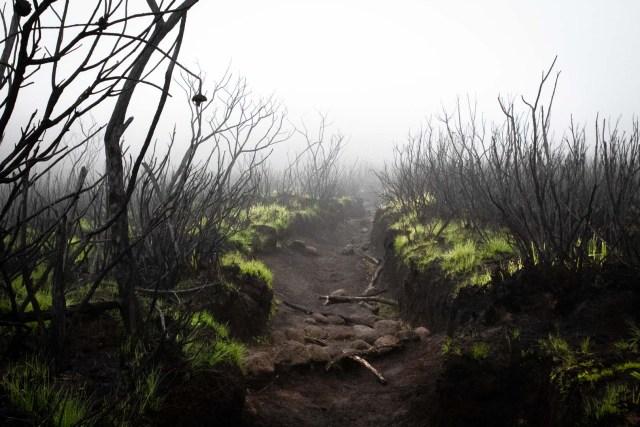 Kilimanjaro Mountain climbing