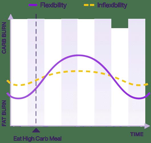 graph representing metabolic flexibility for lumen
