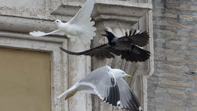pope-doves-attacked.jpg