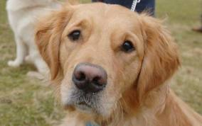 A virus has claimed the lives of six dogs in southeast Michigan. Photo credit: blogs.telegraph.co.uk