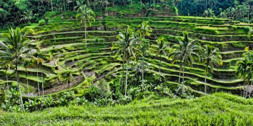 Island of the Gods | Tegalalang Rice Terraces