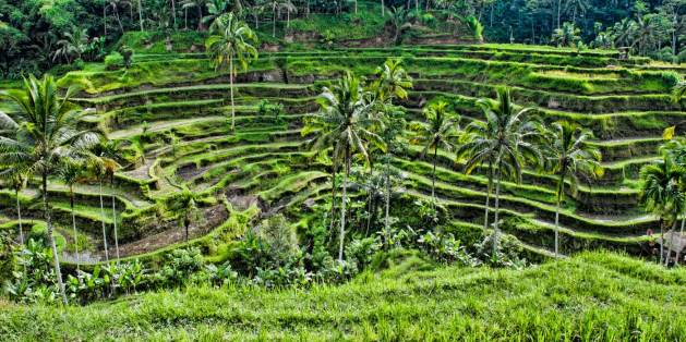 Island of the Gods   Tegalalang Rice Terraces
